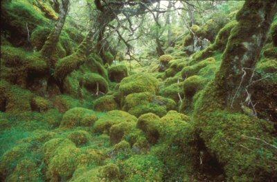 Pianta un albero per salvare la Foresta Scozzese